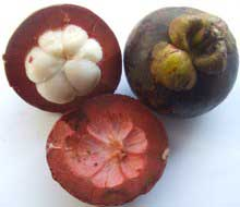 garcinia mangostana slimming tablets